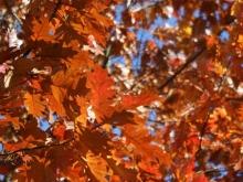 jesien_3